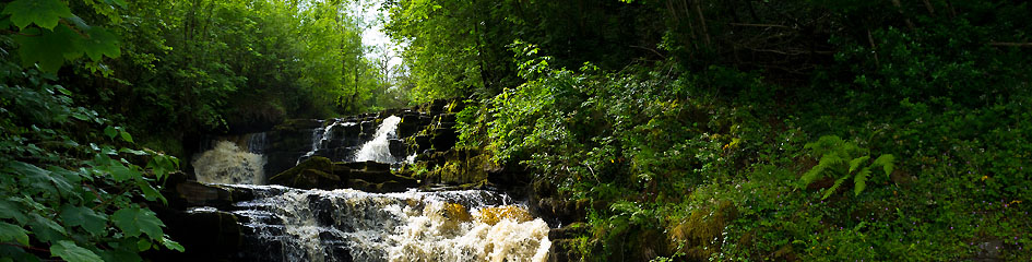 MyCarrick.ie - Local Information in Carrick on Shannon - Waterfall Carrick on Shannon